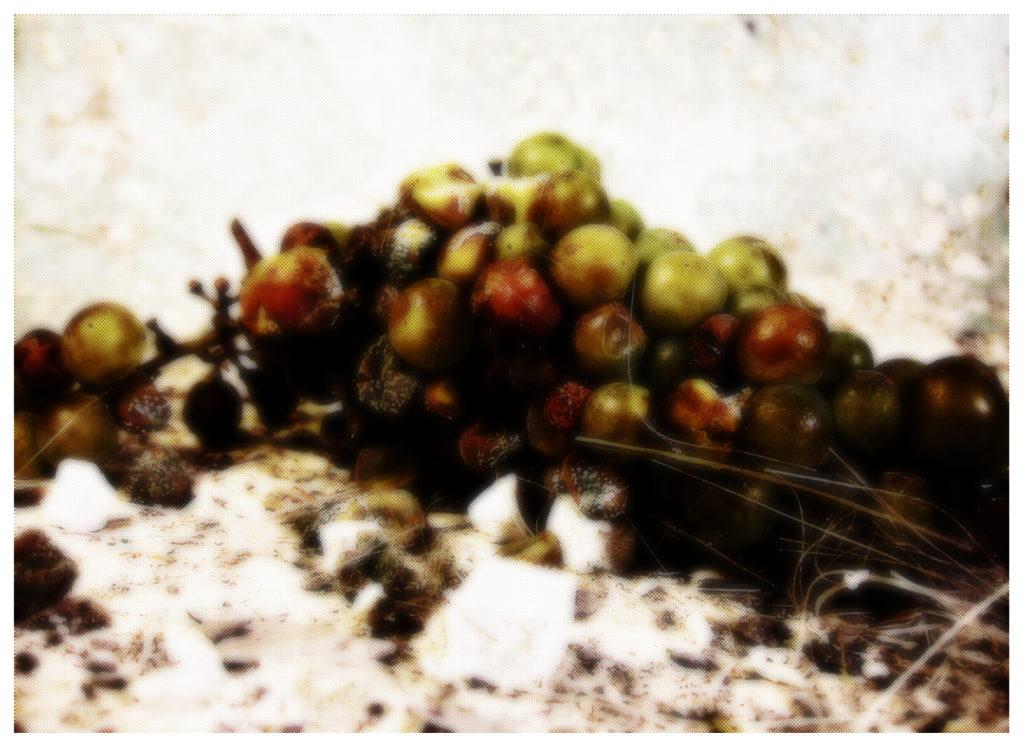 Les raisins de la colère 1, photographie de Eva Nublado. Rréalisation : 2012.